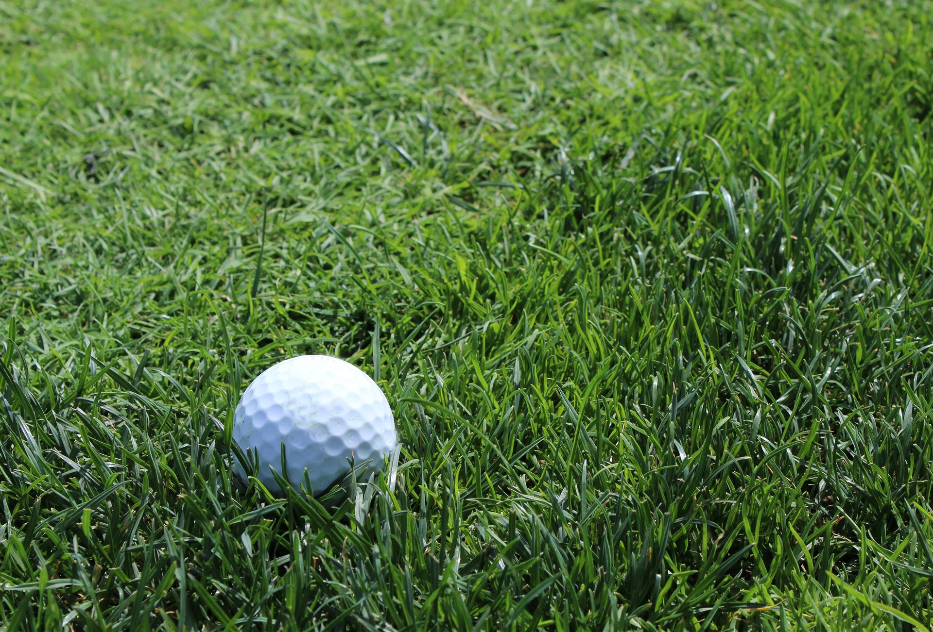Golf-ball-in-grass